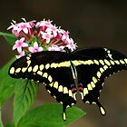 Wonderful Butterfly&#x27;s by George  Link