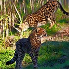 On The Prowl by miroslava