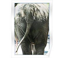Elephants Bum Poster