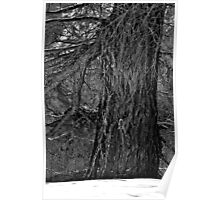 Larch Tree Poster