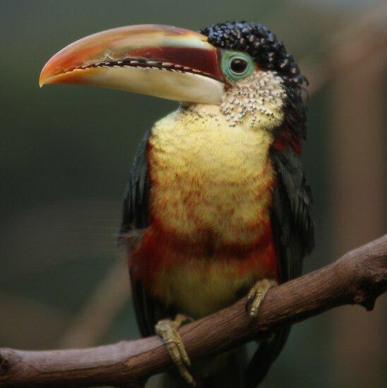 one exotic bird by Alexandr Grichenko