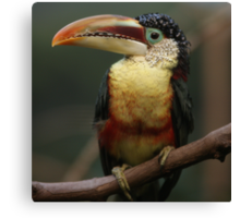 one exotic bird Canvas Print