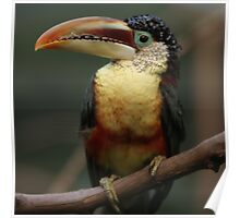 one exotic bird Poster