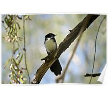 Wagtail ! Poster