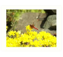 Red Dragonfly in the Yellow Art Print