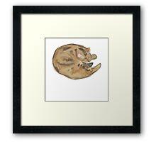 Sleeping Chester Framed Print