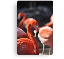 hey there, can't get enough of your love... Canvas Print