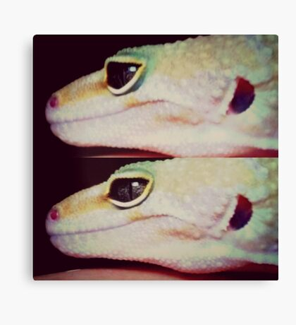 Eye of The Gecko  Canvas Print