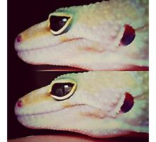 Eye of The Gecko  Photographic Print