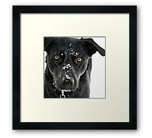 Come Make a Snowdog With Me! Framed Print