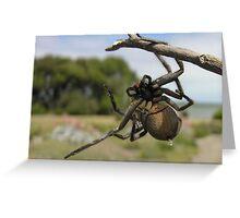 Australian Wolf Spider. Greeting Card
