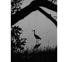 Stalk Reflections Photographic Print