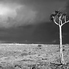 Kokerboom Tree in Storm by Adrianne Yzerman
