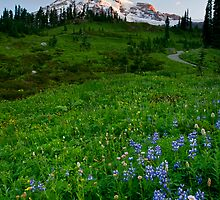 Mountain Dawn by DawsonImages