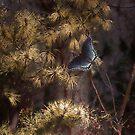 Blue Butterfly by Judi Taylor