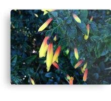 Vibrant Native Fuchsia Flower Metal Print