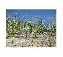 Grassy Dune Art Print