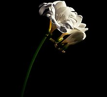 A simple flower by Andreas Stridsberg