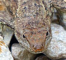 Alligator Lizard by Susan S. Kline