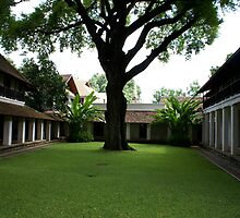 Tamarind Tree by contagion