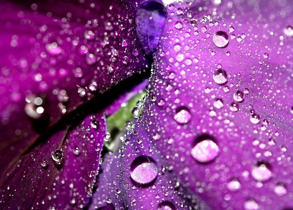 Purple Rain by Sharon Johnstone