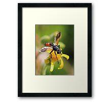 For the love of a flower Framed Print