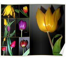 Tulip Time - Collage Poster