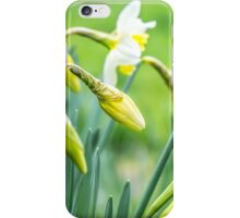 Daffodils in a Kent garden iPhone Case/Skin