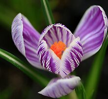 Spring Sparkle by Deborah  Benoit