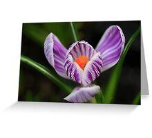 Spring Sparkle Greeting Card