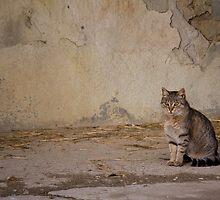 Cat by becks78