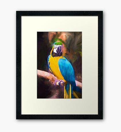 Hello There Macaw Framed Print