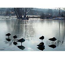 Sleeping Geese Photographic Print