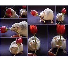 I love tulips! Photographic Print