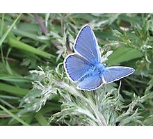 Blue Wings Photographic Print