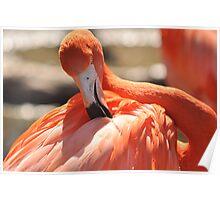 flamingo stylin Poster