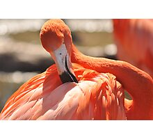 flamingo stylin Photographic Print