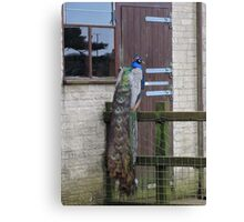 Someone Is At The Door Canvas Print