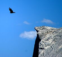 Bird off Half Dome by photoclimber