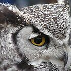 Eagle Owl by RichardWalk