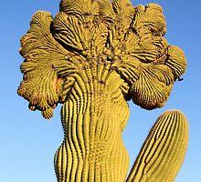 Cristate Saguaro  by Bindee