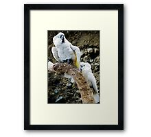 Cockatoos Framed Print
