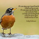 Emily Dickinson's Robin by Bonnie T.  Barry