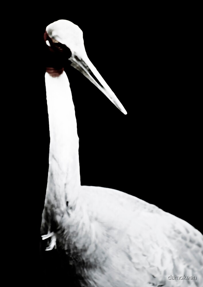 Stork in the Shadow by damokeen