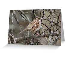 White Throated Sparrow 2 Greeting Card