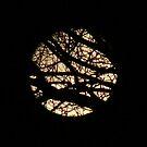 Moon Setting by SpiritFox
