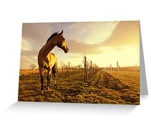 the golden light of sunset on a winter evening Greeting Card