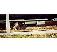 Bunnies Photographic Print