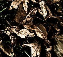 Dark Autumn by Areej