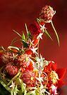 Make Salad Not War by John Poon